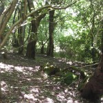Woodland approach to All Saint's Church, Buncton, West Sussex
