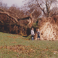 After the 1987 storm, Queen's Park in Brighton